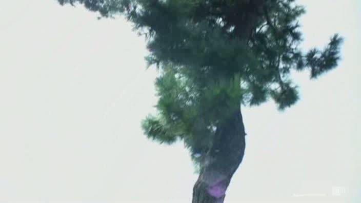 はだかの履歴書 No.1【朝日かりん】